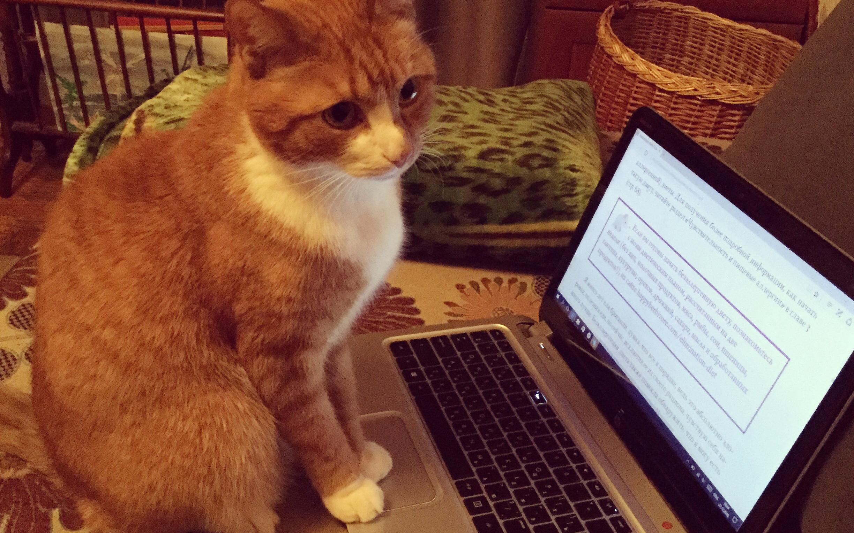 кот проходит курс по аналиитке